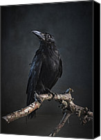 Fantasy Photo Canvas Prints - Black Bird Sitting On An Old Branch Canvas Print by Zena Holloway