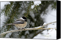 Little Birds Canvas Prints - Black-capped Chickadee Canvas Print by Reflective Moments  Photography and Digital Art Images