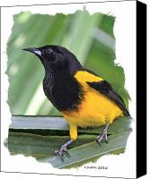 Oriole Canvas Prints - Black-cowled Oriole Canvas Print by Larry Linton