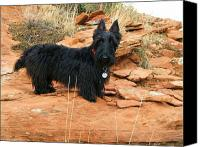 Scottie Dog Canvas Prints - Black Dog Red Rock Canvas Print by Michele Penner