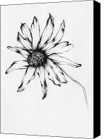 Susan Drawings Canvas Prints - Black-Eyed Susan Canvas Print by Christopher Lem