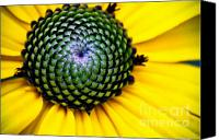 (c) 2010 Canvas Prints - Black Eyed Susan Goldsturm Flower Canvas Print by Ryan Kelly