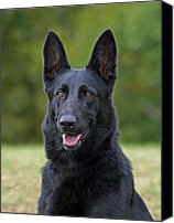 Alsatian Canvas Prints - Black German Shepherd Dog Canvas Print by Sandy Keeton