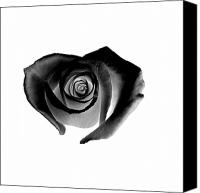 Black Rose Canvas Prints - Black Heart-Shaped Rose Canvas Print by Glennis Siverson