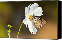 Flower Special Promotions - Black on white Canvas Print by Fotosas Photography
