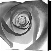 Black Rose Canvas Prints - Black Petals Canvas Print by Glennis Siverson
