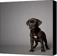 Gulf Coast States Canvas Prints - Black Puppy Canvas Print by Square Dog Photography