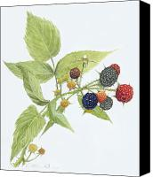 Custom Framed Art Canvas Prints - Black Raspberries Canvas Print by Scott Bennett