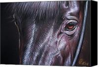 Horse Portrait  Canvas Prints - Black stallion Canvas Print by Elena Kolotusha