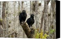 Wetlands Canvas Prints - Black vultures Canvas Print by David Lee Thompson