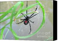 Black Widow Canvas Prints - Black Widow Wheel Canvas Print by Al Powell Photography USA