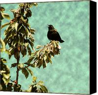 Open Mixed Media Canvas Prints - Blackbirds Song Canvas Print by Bonnie Bruno