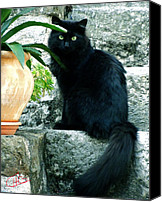 Colette Canvas Prints - Blacky Cat Canvas Print by Colette Hera  Guggenheim