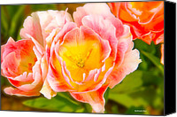 Flower Prints Greeting Cards Canvas Prints - Blaze Canvas Print by Christopher  Ward