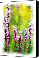 Violet Prints Canvas Prints - Blazing Star - vignette Canvas Print by Dan Carmichael