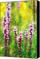 Violet Prints Canvas Prints - Blazing Star  Canvas Print by Dan Carmichael