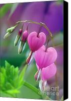 Foilage Canvas Prints - Bleeding Heart - D005135 Canvas Print by Daniel Dempster