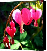 Pity Photo Canvas Prints - Bleeding Heart Canvas Print by Brittany H