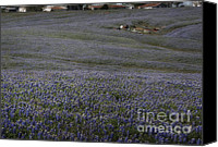 Texas Bluebonnets Canvas Prints - Blemish on Skin of Blue Canvas Print by Fred Lassmann