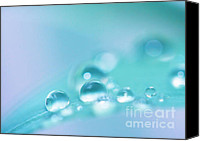Drops Canvas Prints - Bleu Canvas Print by Kristin Kreet