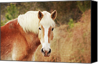 Horse Standing Canvas Prints - Blond Horse Canvas Print by Daniela Duncan