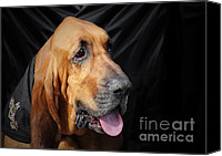 Portraits Canvas Prints - Bloodhound - Governed by a world of scents Canvas Print by Christine Till