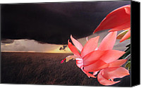 Katie  Wing Vigil Canvas Prints - Blooms Against Tornado Canvas Print by Katie  Wing Vigil
