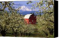 Farm Scenes Canvas Prints - Blossom Time Canvas Print by Eggers   Photography