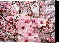 Tree Blossoms Canvas Prints - Blossoms Art Spring Pink Tree Blossom Floral Baslee Troutman Canvas Print by Baslee Troutman Fine Art Collections
