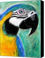 Mike Pastels Canvas Prints - Blue and Gold Macaw Canvas Print by Mike Paget