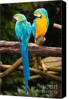 Animal Canvas Prints - Blue-and-Yellow Macaw  Canvas Print by Johan Larson