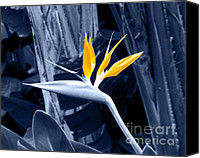 With Photo Canvas Prints - Blue Bird of Paradise Canvas Print by Rebecca Margraf