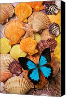 Insects Photo Canvas Prints - Blue butterfly and sea shells Canvas Print by Garry Gay