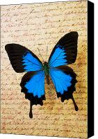 Notes Canvas Prints - Blue butterfly on old letter Canvas Print by Garry Gay