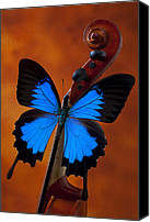 Still Life Canvas Prints - Blue Butterfly On Violin Canvas Print by Garry Gay