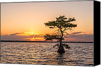 Claudia Domenig Canvas Prints - Blue Cypress Lake Sunrise Canvas Print by Claudia Domenig