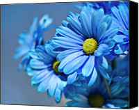 Wayne Canvas Prints - Blue Daisies Canvas Print by Jody Trappe Photography