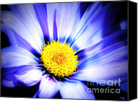 Wild-flower Mixed Media Canvas Prints - Blue Daisy Canvas Print by Ms Judi