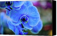 Painterly Orchids Canvas Prints - Blue Diamond Canvas Print by June Marie Sobrito