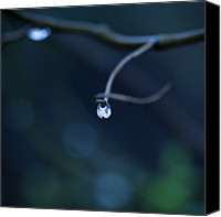 Windsor Canvas Prints - Blue Drop Canvas Print by Photography by Gordana Adamovic Mladenovic
