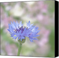 Bluet Canvas Prints - Blue Fantasy Canvas Print by Kim Hojnacki
