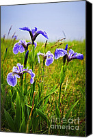 Canada Canvas Prints - Blue flag iris flowers Canvas Print by Elena Elisseeva