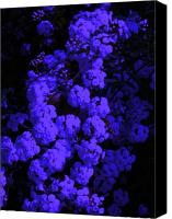 Bamhs Blair Canvas Prints - Blue Flowers Canvas Print by Bamhs Blair
