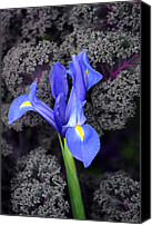 Flower Images Canvas Prints - Blue Green Yellow Grey And Purple Canvas Print by Skip Willits