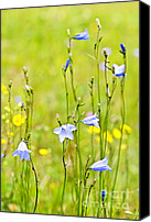 Blossoming Canvas Prints - Blue harebells wildflowers Canvas Print by Elena Elisseeva