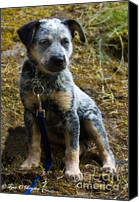 Blue Heeler Canvas Prints - Blue Heeler Pup Canvas Print by Tyra  OBryant