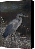 Fig Bird Canvas Prints - Blue Heron Painting  Canvas Print by Don  Wright