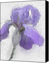 Freehand Drawing Canvas Prints - Blue Iris Canvas Print by Gael Keevil