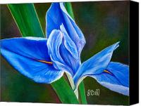 Flora Pastels Canvas Prints - Blue Iris Canvas Print by Laura Bell