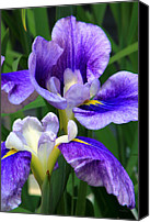 Debbie Photo Canvas Prints - Blue Irises Canvas Print by Deborah  Crew-Johnson